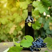 Wine concept. Food and drink background with red wine, fresh bunch of grapes and wine bottle over na