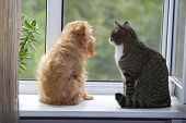 stock photo of fluffy puppy  - Striped gray cat and dog sitting on the window - JPG