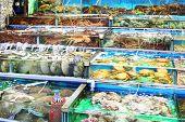 Seafood market fish tank in Hong Kong