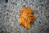 Golden Autumn Leaf On Concrete
