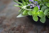 Herbs still life.  With oregano, lavender, rosemary, thyme, sage and basil, over blurred background.