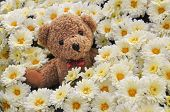 foto of teddy  - Little teddy bear in lovely flowers background - JPG