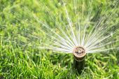 stock photo of sprinkling  - automatic irrigation system with sprinkler watering fresh lawn - JPG