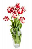Beautiful Red Tulips Flowers Bouquet on white