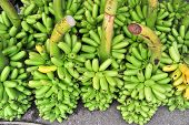 Bunch Of Green Banana