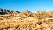 Namibian Nature