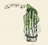 hand drawn vintage illustration of asparagus