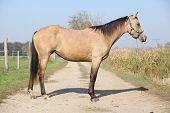 Nice Palomino Horse