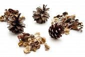 Pine plugs with potpourri