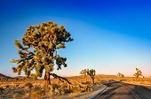 Joshua Tree And Desert Road Before Sunset