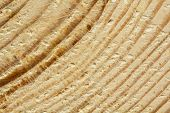Closeup Of Rough Sawn Pine Tree Texture