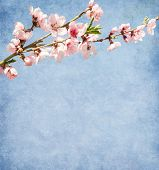 Old paper with peach blossom