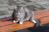 Old Cute Cat Pet  Laying On Wooden  Bench