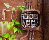 Ceramic Fuses In Old Electric Box And Green Ivy