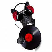 Dog Record Vinyl