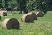 Hay Bales (Round)