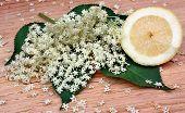 foto of elderberry  - Health elderberry flowers and lemon on a wooden table - JPG