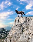 Proud Stallion Standing On Top Of A Cliff