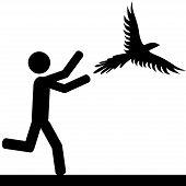 Catch the bird
