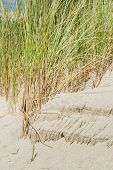 stock photo of dune grass  - Dune with dune-grass at the coast of Holland