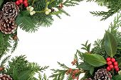 Winter and christmas background border decoration with holly, mistletoe and  greenery over white.