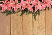 Pink poinsettia flower background border with holly and christmas greenery over oak wood.
