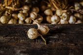 Still Life Composition With Garlic