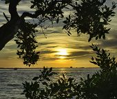 picture of florida-orange  - Sunrise in Sanibel Island, Florida in the Summer.