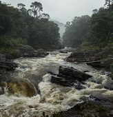 River in the forest in national park of Ranomafana, Madagascar