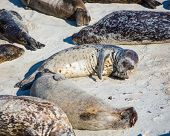 Harbor Seal Cleaning