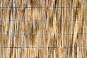 Beautiful ReedsTexture