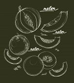 Ector Hand Drawing Set Of Melons
