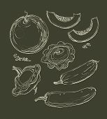 Vector Hand Drawing Set Of Melons