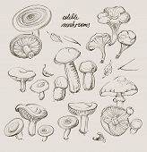 stock photo of morel mushroom  - vector hand drawing a realistic set of mushrooms - JPG
