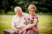 Senior couple with dog