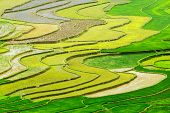 Colorful shape in the terraced rice field