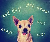 a dog in front of a chalkboard with commands written on it toned with a retro vintage instagram filt