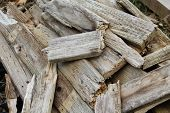 Weathed Wood Scraps Pacific Northwest