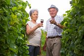 Happy mature couple - senior people (man and woman) - drinking wine