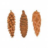 Three Pine Cones Vector