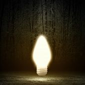 Conceptual image with light bulb and night forest