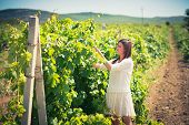 image of wine-press  - beautiful young woman walks on a vineyard in a hot summer sunny day - JPG