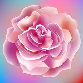 flower, rose, blossom, bloom, floral, background, summer, spring, petal, garden, plant, nature, beau
