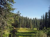 Lea In Sequoia National Park