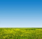 Green grass and fresh, young flowers on spring field against blue clear sky. HD quality, perfect for background, nature theme etc.