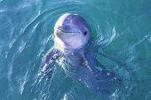 Dolphin Scene