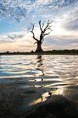 Beautiful sunset over the dead tree and its reflection on the lake surface near U-Pain bridge, Manda
