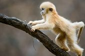 picture of baby-monkey  - Baby Monkey climb higher up the tree - JPG