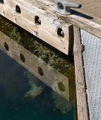 Under The Floating Dock