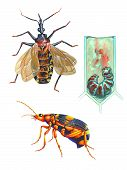 Realistic illustration about insects